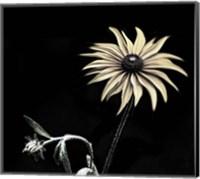 Framed Sunflower Copy