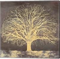 Framed Golden Oak
