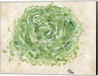 Framed Succulent No. 2