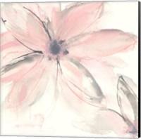 Framed Blush Clematis II