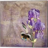 Framed Ville de Paris II
