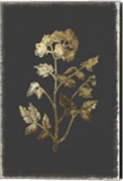 Framed Botanical Gold on Black II
