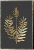 Framed Botanical Gold on Black III