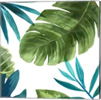 Framed Tropical Leaves II