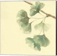 Framed Gingko Leaves III