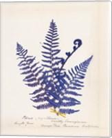 Framed Botanical Fern IV Blue