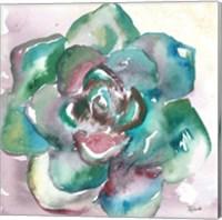 Framed Succulent Watercolor IV