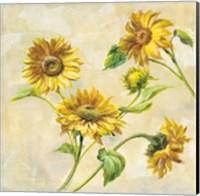 Framed Farm Nostalgia Sunflowers