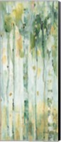 Framed Forest VI