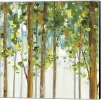 Framed Forest Study VIII