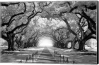 Framed Oak Alley inf CHECK!!!!!