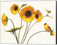 Framed Sunny Flowers on White