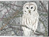 Framed Barred Owl