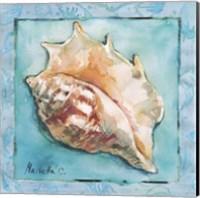 Framed Shell 3