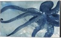 Framed Octopus I