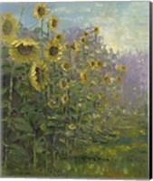 Framed Sunflowers Sunrise