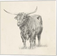 Framed Longhorn Steer Sketch I