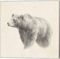 Framed Western Bear Study
