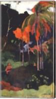 Framed Mahana Ma'a 1892