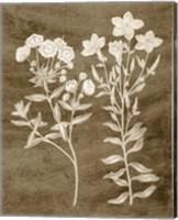 Framed Botanical in Taupe I