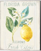 Framed Floursack Lemon I
