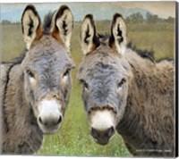 Framed Cute Donkeys