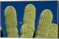 Framed Color Saguaro Cactus Moon Arizona Superstition Mtns