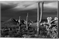 Framed Saguaros Superstition Mtns Arizona
