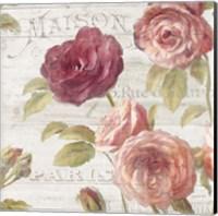 Framed French Roses V