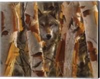 Framed Wolves - The Guardian