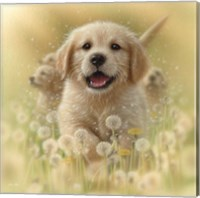 Framed Golden Retriever Puppy - Dandelions - Square