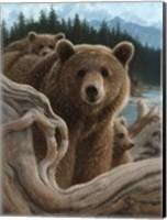 Framed Brown Bears - Backpacking