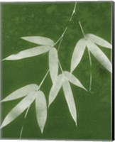 Framed Green Spa Bamboo I