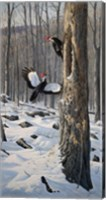 Framed Swooping In - Pileated Woodpeckers
