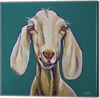 Framed Goat On Teal