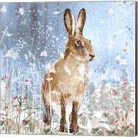 Framed Winter Hare