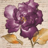 Framed Lilac Beauty I