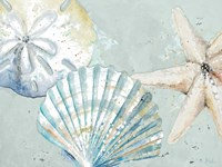 Framed Beach Shells