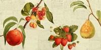 Framed Fruits de Saison