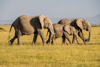 Framed Africa, Kenya, Amboseli National Park, Elephant