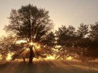 Framed Sunrise Through Fog And Trees At Cades Cove