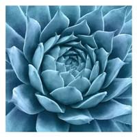 Framed Silvery Blue Agave