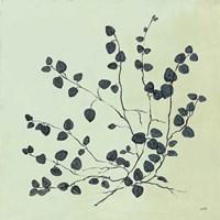 Framed Botanical Study VII Sage