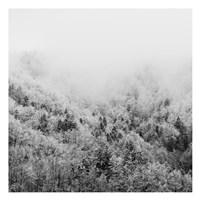 Framed Winter Storm 1