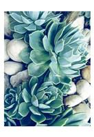 Framed Succulents no words