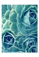 Framed Succulents With Dew 2