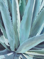 Framed Blue Agave