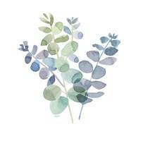 Framed Natural Inspiration Blue Eucalyptus on White II