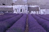 Framed Lavender Abbey