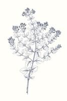 Framed Indigo Botany Study VI